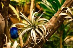 Meduzy ` s włosy Zdjęcie Royalty Free
