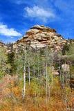 Medycyna łęku lasu państwowego krajobraz Wyoming obraz stock