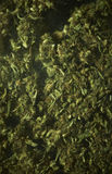 Medyczna marihuana RX Zdjęcia Stock