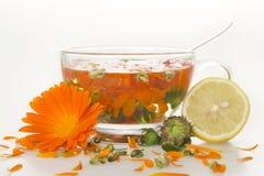 medyczna nagietek herbata Zdjęcie Stock
