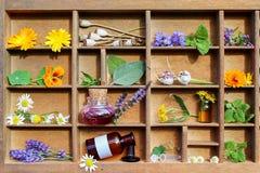 Medyczne rośliny w listowej skrzynce Zdjęcia Stock