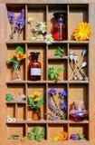Medyczne rośliny w listowej skrzynce Obraz Royalty Free
