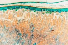 Medycznego Lab zwijacza Przygotowany mikroskopijny żyto zdjęcia stock