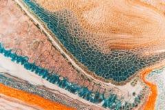 Medycznego Lab zwijacza Przygotowany mikroskopijny żyto Zdjęcie Royalty Free