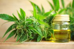 Medyczny marihuana oleju ekstrakt i konopiana roślina Obraz Royalty Free