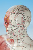 Medyczny model Zdjęcie Royalty Free