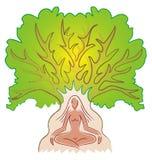 medytaci drzewa kobieta Obraz Royalty Free