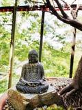 Medytacja w Bonsai zdjęcia royalty free
