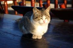 Medytacyjny kot 2 Obrazy Royalty Free