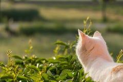 Medytacyjny kot w ranku słońcu Zdjęcia Royalty Free