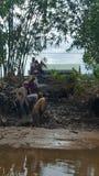 Meekong delty miejscowi Zdjęcia Royalty Free