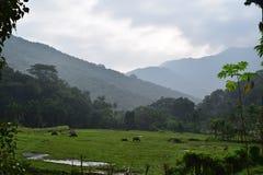 Meemure Stock Foto's