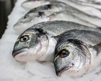 Meerââfish auf Eis Lizenzfreie Stockfotos