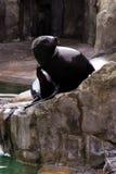 Meer-†‹â€ ‹Löwe, freundliche Tiere am Prag-Zoo Stockfotografie