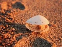 Meer-†‹â€ ‹Oberteil fand auf dem Sand an einem Strand Sonnenuntergangzeit färbt alles orange stockfoto