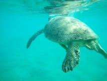 Meer-†‹â€ ‹Schildkröte Lizenzfreies Stockbild