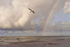 Meer-†‹â€ ‹Landschaft, Regenbogenwolken, Vögel stockbild