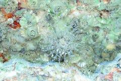 Meer Anemone On ein Felsen Stockfoto