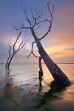 Meer Batur Bali - Indonesië Royalty-vrije Stock Foto's