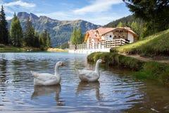Meer bij de Dolomietbergen Stock Afbeeldingen
