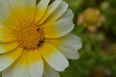 Meer bloemen Stock Foto