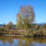 Meer in de Herfst met Kleurrijke Bomen Royalty-vrije Stock Afbeeldingen