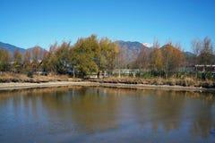 Meer in de Herfst met Kleurrijke Bomen Stock Foto