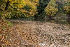 Meer in de herfstbladeren dat wordt behandeld Stock Foto's