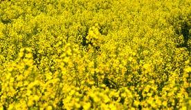 Meer der Blumen Lizenzfreie Stockfotos