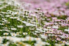 Meer der Blumen Lizenzfreie Stockfotografie