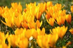 Meer der Blumen Stockbilder