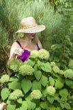 Meer der grünen Hydrangeas Stockfoto