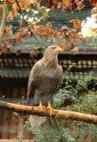 Meer Eagle Lizenzfreies Stockbild