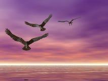 Meer Eagles Lizenzfreie Stockfotografie