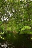 Meer in een bos Royalty-vrije Stock Fotografie