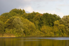 Meer en bomen Stock Foto