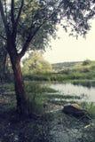 Meer en bomen stock afbeelding