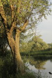 Meer en bomen royalty-vrije stock afbeeldingen