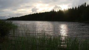 Meer en bos vóór zonsondergang stock videobeelden