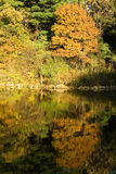 Meer en de herfstbos stock afbeeldingen