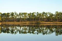 Meer in Everglades stock fotografie