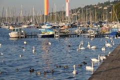 Meer Genève in Genève, Zwitserland Stock Afbeeldingen