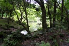 Meer in het bos royalty-vrije stock foto's
