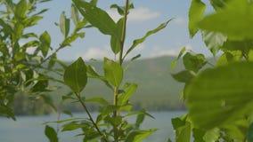 Meer in het bos in de voorgrond zijn er takken van bomen Boomtak in het voorgrondmeer stock video