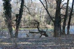 Meer in het midden van het bos dichtbij Alcsut Hongarije stock foto's