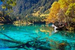 Meer in het nationale park van Jiuzhaigou royalty-vrije stock fotografie