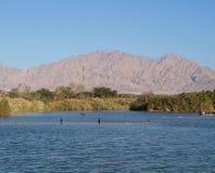 Meer in het park, aalscholvers die dichtbij het water rusten Royalty-vrije Stock Afbeeldingen
