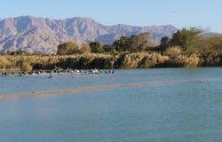 Meer in het park, aalscholvers die dichtbij het water rusten Stock Foto's