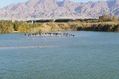 Meer in het park, aalscholvers die dichtbij het water rusten Royalty-vrije Stock Foto
