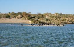 Meer in het park, aalscholvers die dichtbij het water rusten Stock Afbeelding